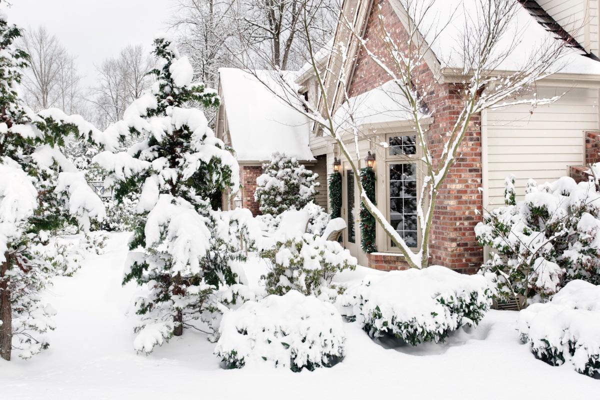 Як вберегти тую від снігів і морозів? Вкриваємо дерево правильно щоб не трапилось біди